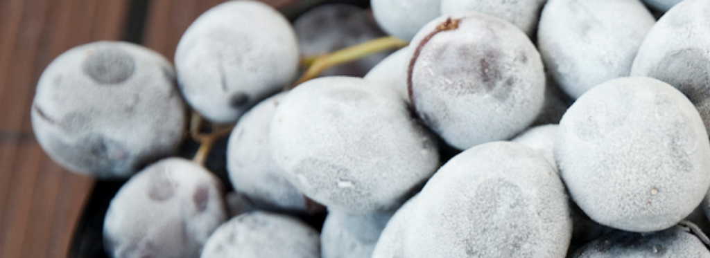 Frozen Grapes are Good