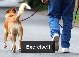 exercise-instead-of-ingest